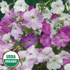 Old-Fashioned Vining Petunia Organic Seeds
