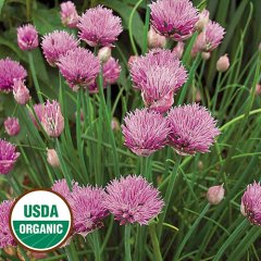 Chives Organic Seeds
