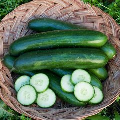 Green Finger Cucumber Seeds